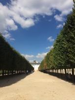 Symmetrical trees in the Jardin du Palais Royal