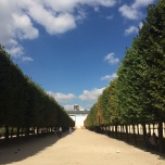 Symmetrical trees in the Jardin du Palais Royal